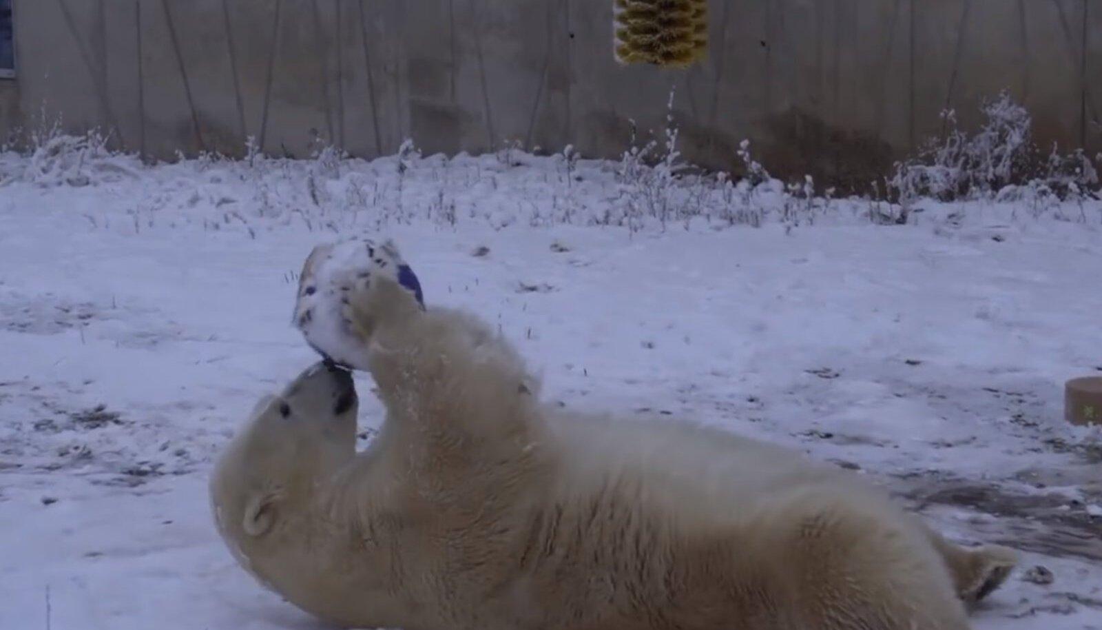 Jääkaru Raspi