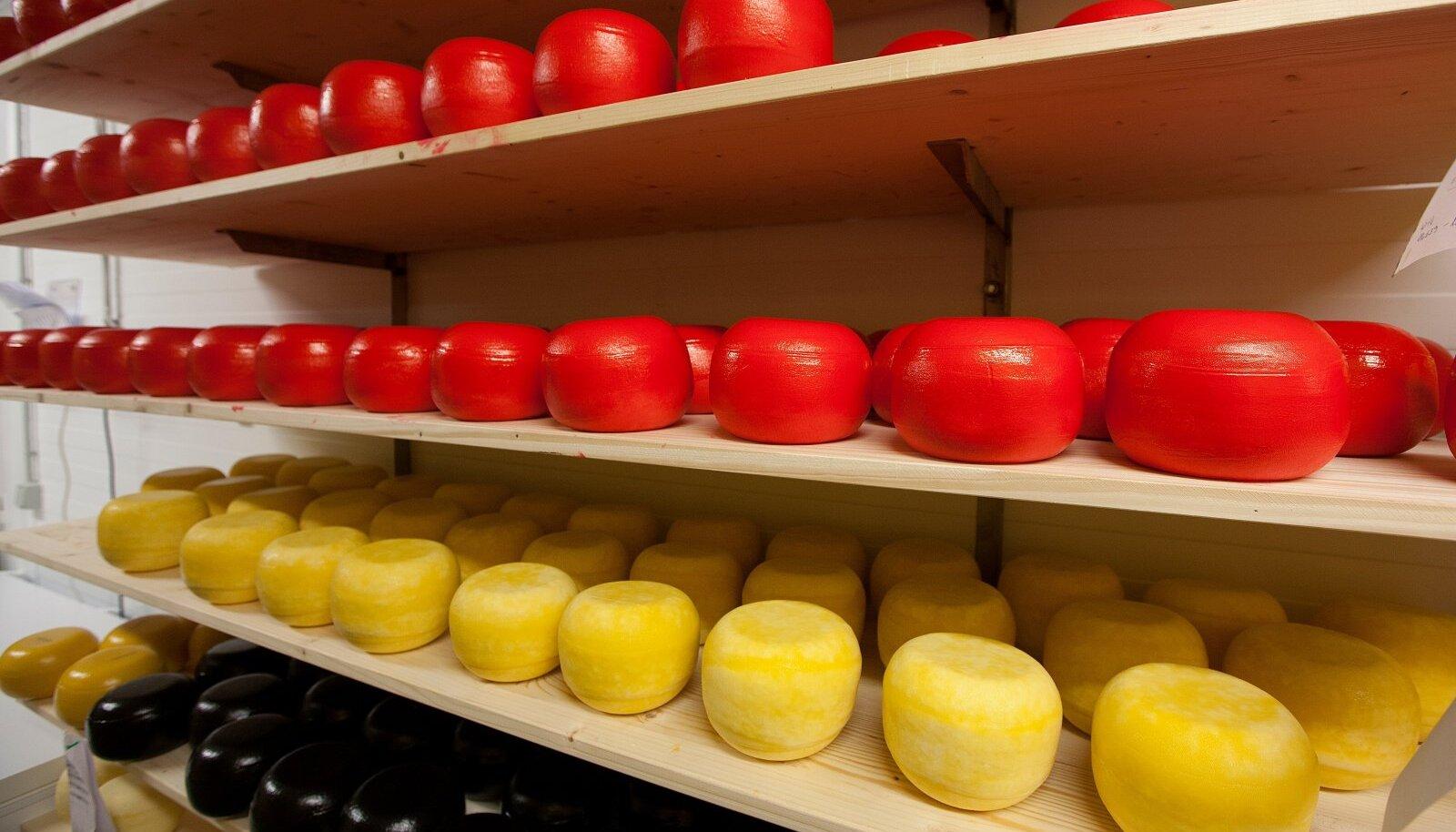 Andre farmi juustukojas küpsevad juustukerad rahulikult riiulitel.
