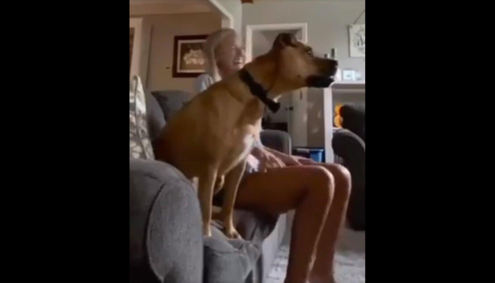 Koer jalgpalli vaatamas