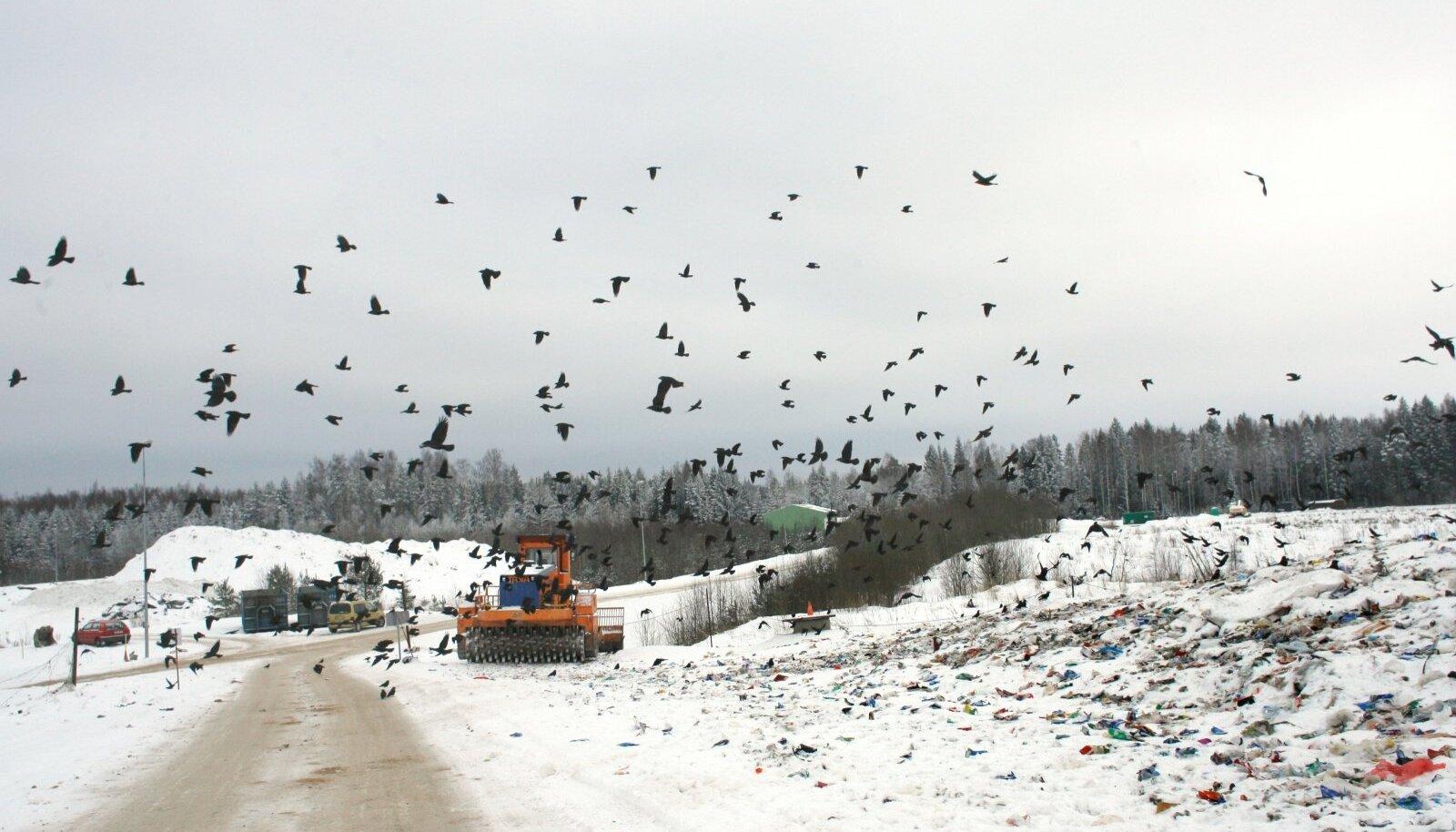 """SAASTETASUDEST PRII: Uikala prügilas tegutseb praegu 100 000 tonni mahutav """"vaheladu"""". Näeb välja nagu prügila, aga paberite järgi pole."""