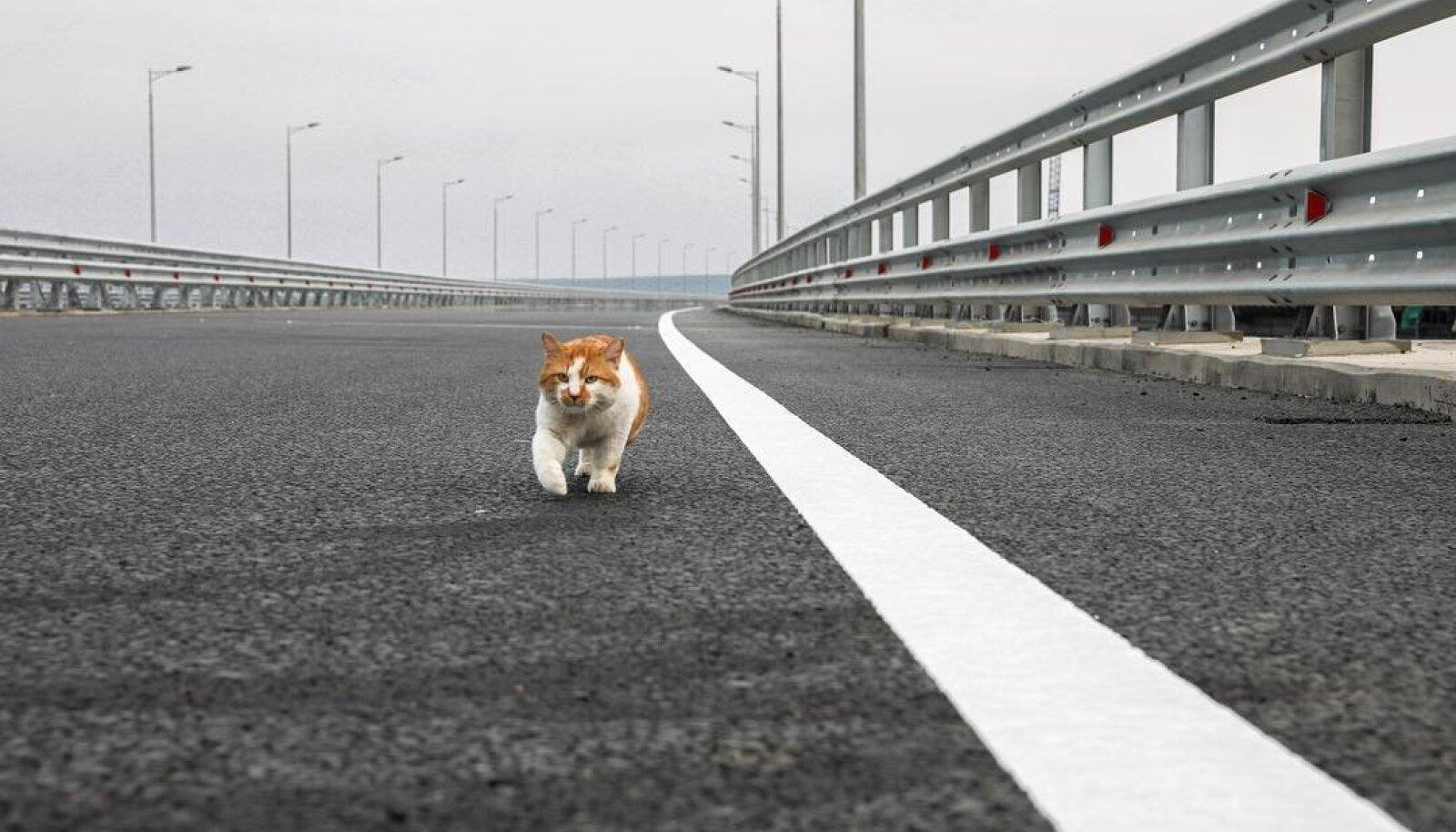 Mostik ületab silda