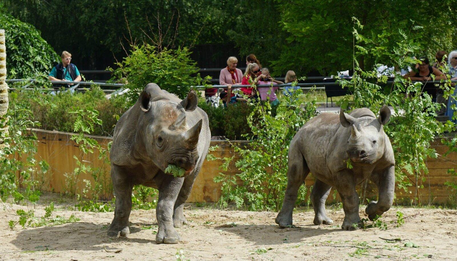 Ninasarvikud loomaaias.