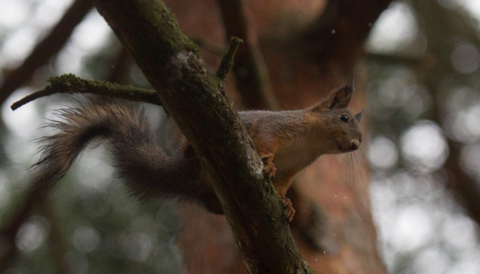 Oravajaht lõppes katkise profikaameraga