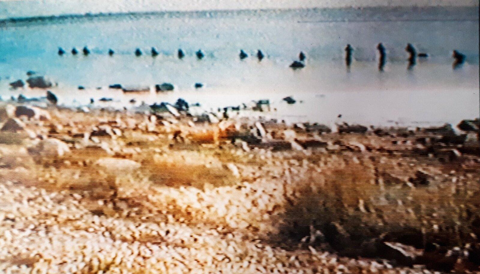 VIIMASED KAADRID: Septembri alguses sai luurerühm endale videokaamera. Need pildid on pärit nädalapäevade enne õnnetust tehtud videost.