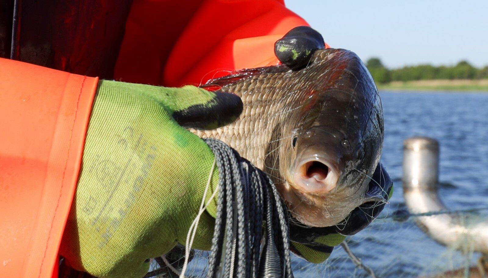 Kalapüük Hiiumaal
