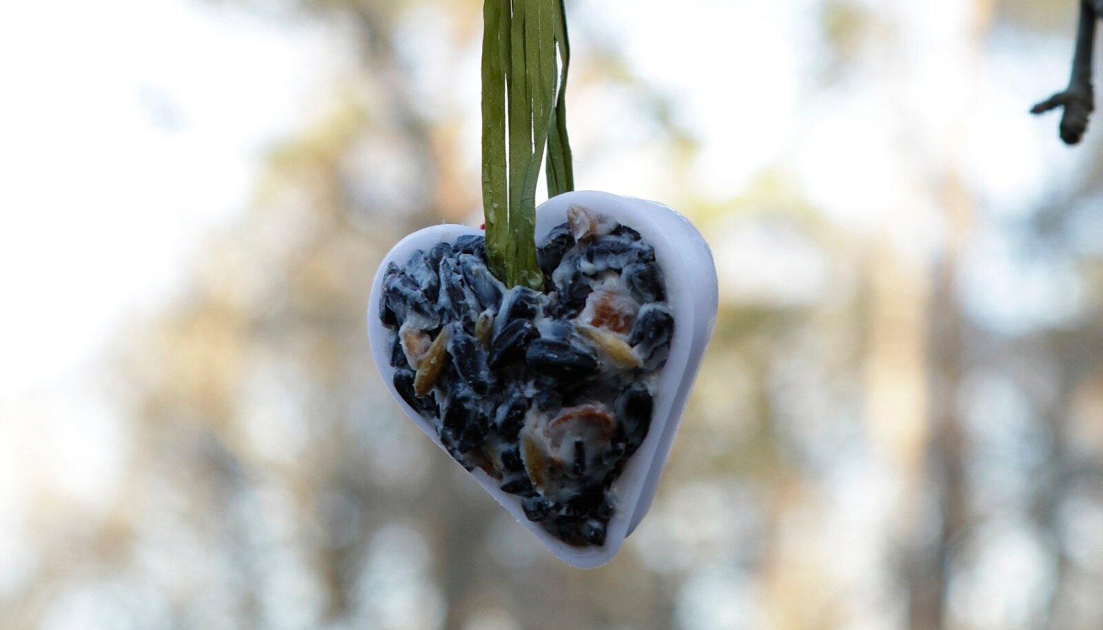 Poes müüdavate rasvapallide asemel saab kodus valmistada näiteks südameid.