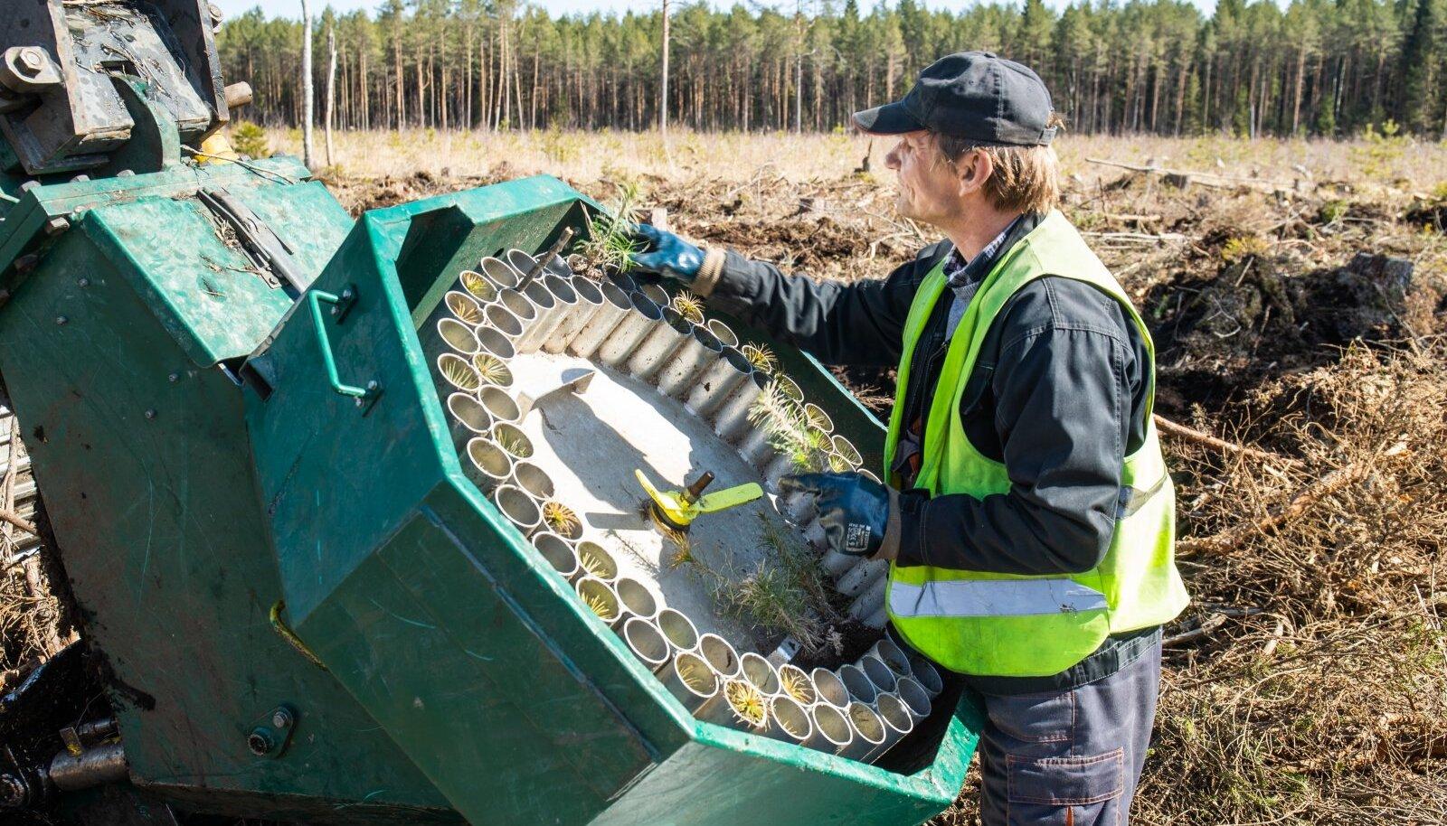Машинист экскаватора заполняет кассету лесопосадочной машины горшечными растениями, которые машина сажает в почву.
