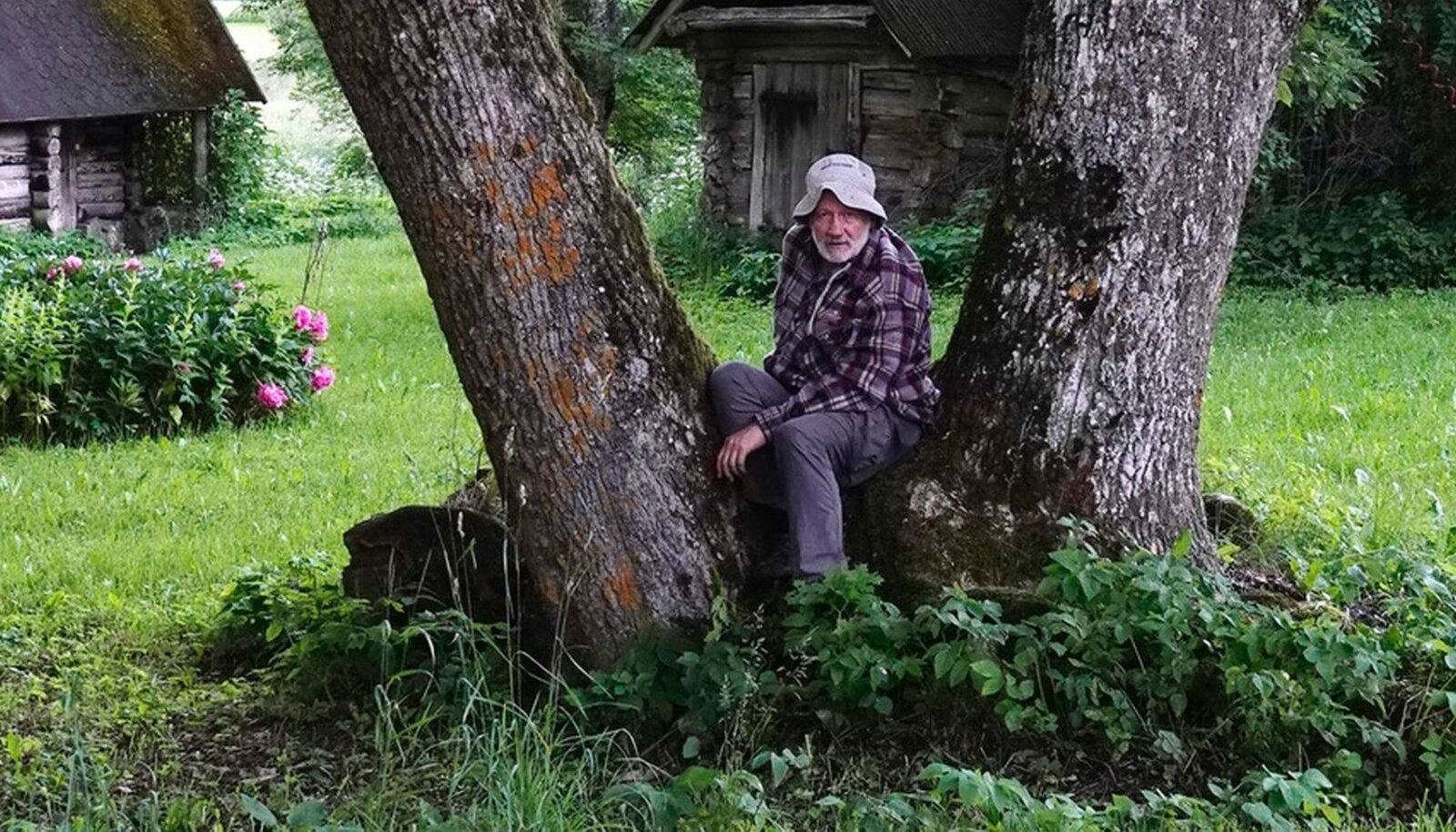Hendriku oma põlispuu on suguseltsi talu õues kasvav saar. Selle algsest neljast harust on praeguseks järele jäänud kaks