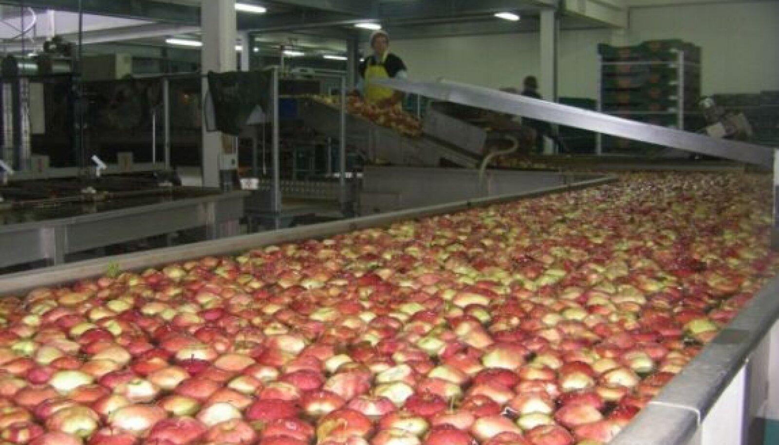 Poolas kasvatatakse tohutult palju õunu. Mullune kogutoodang oli 2,8 miljonit tonni. Õunu pestakse, hoidistatakse ja müüakse aasta ringi ning nad on Poola ekspordis liha järel teisel kohal.
