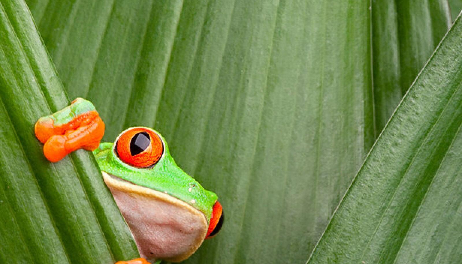 "Petrone Prindi raamatu ""Minu Costa Rica"" kaas."