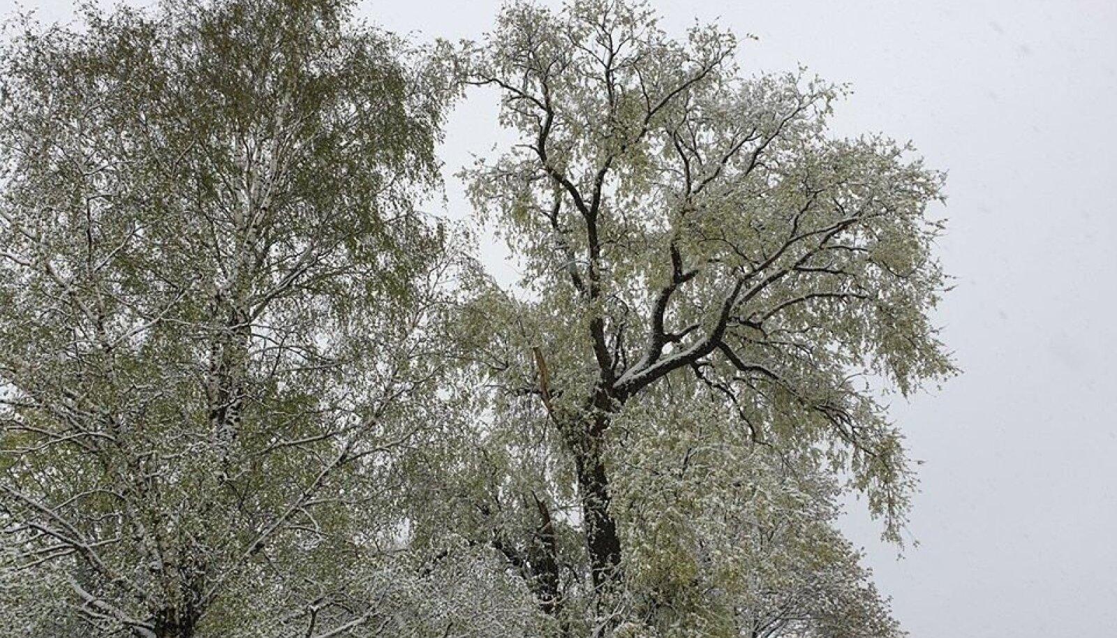 12. mai lumine hommik Lasval. Selline vaatepilt pole võimatu ka järgmisel nädalal.