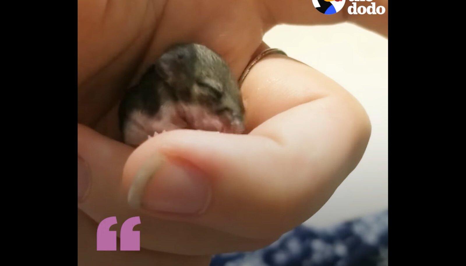 Hambutu ja pimeda hiirepoja leidnud tüdruk kasvatas temast julge peresõbra