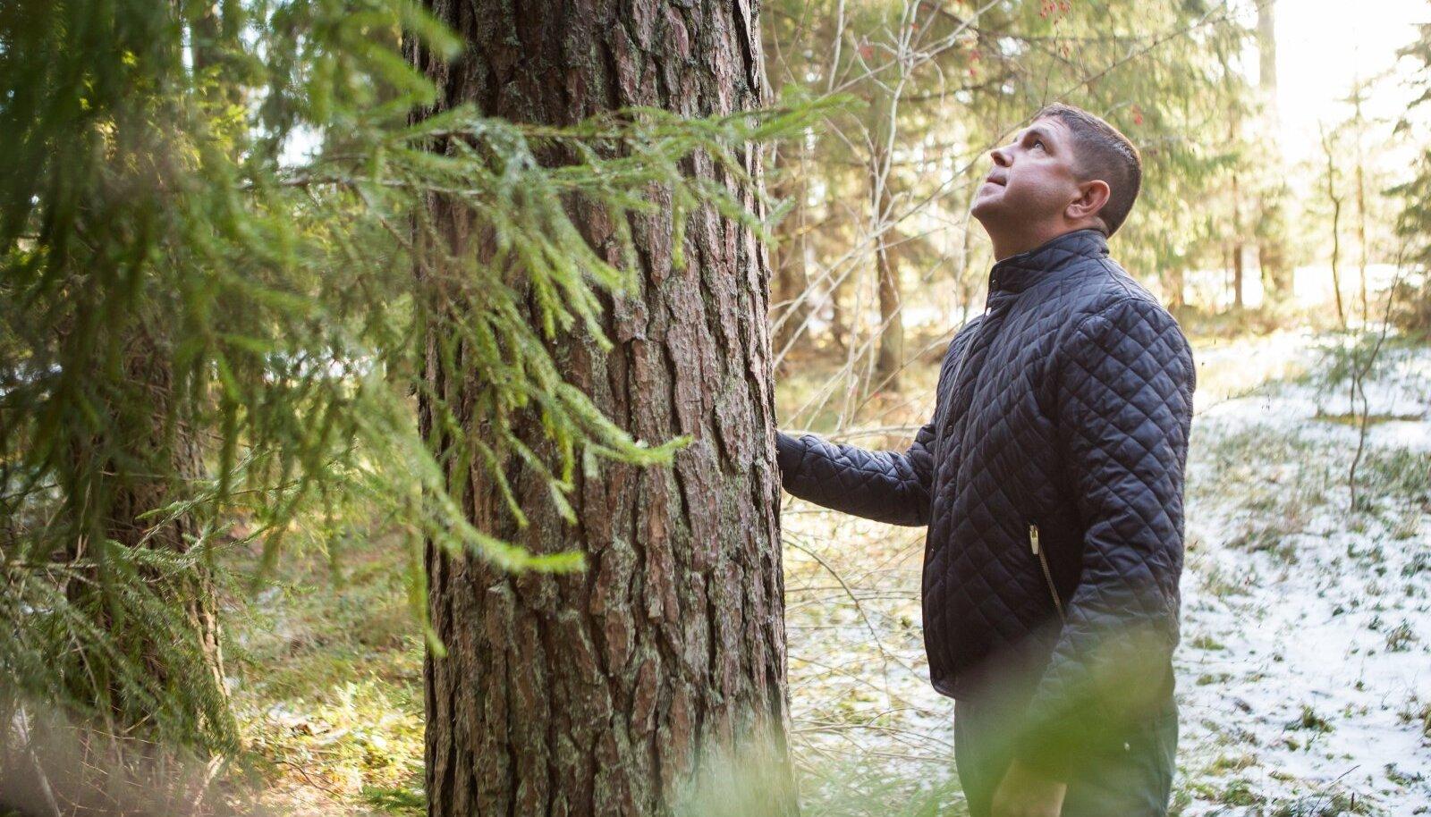 Lääne-Viru metsaomaniku Marko Tumanovi sõnul ei saa tema ema talle tagastatud 150-hektarisel alal piirangute tõttu isegi enda tarbeks küttepuid teha.