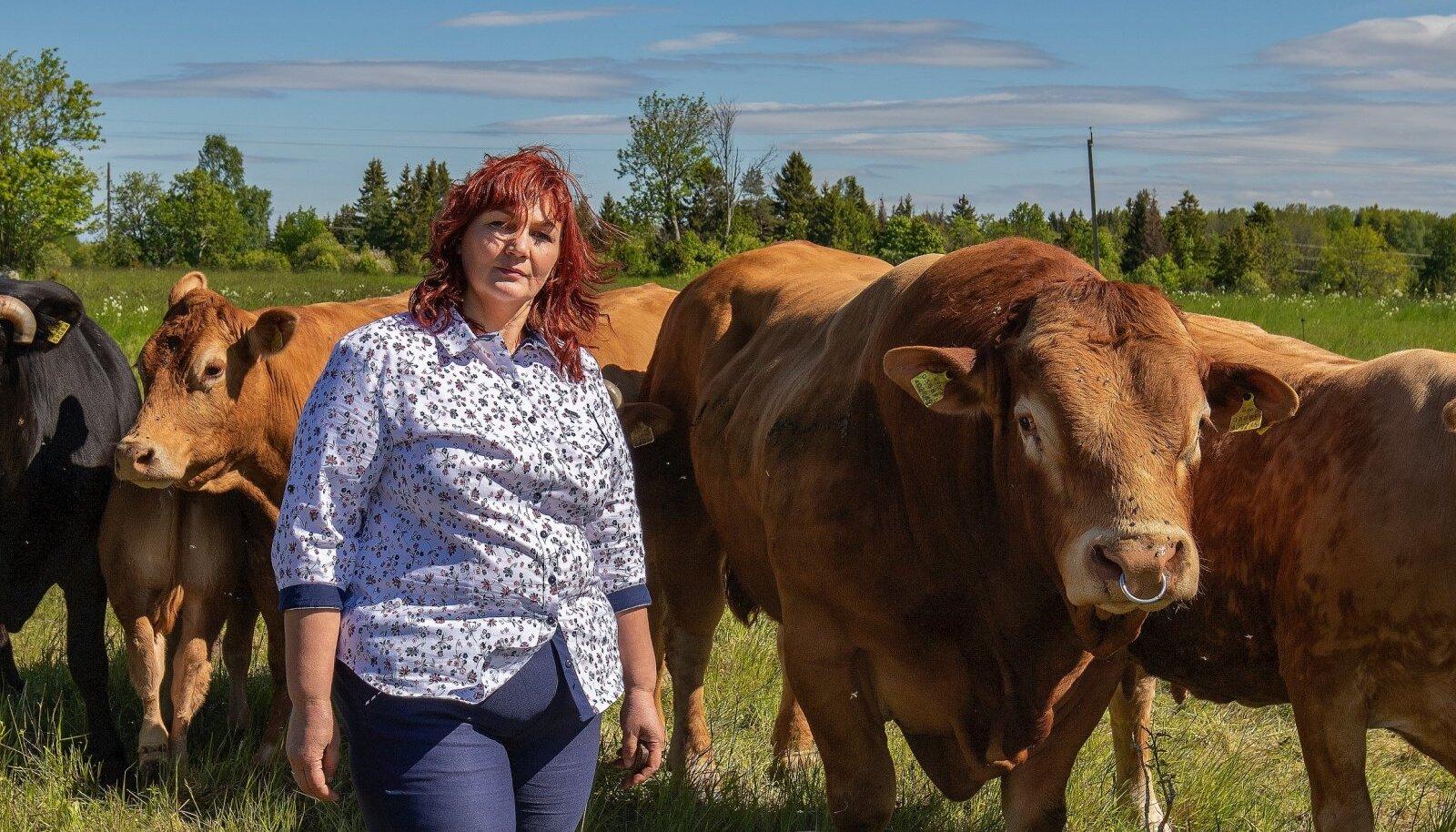 """""""Lihaveiste kasvatamine annab võimaluse väärtustada meie oma maad, poollooduslikke kooslusi,"""" teatab Diana Pärna."""