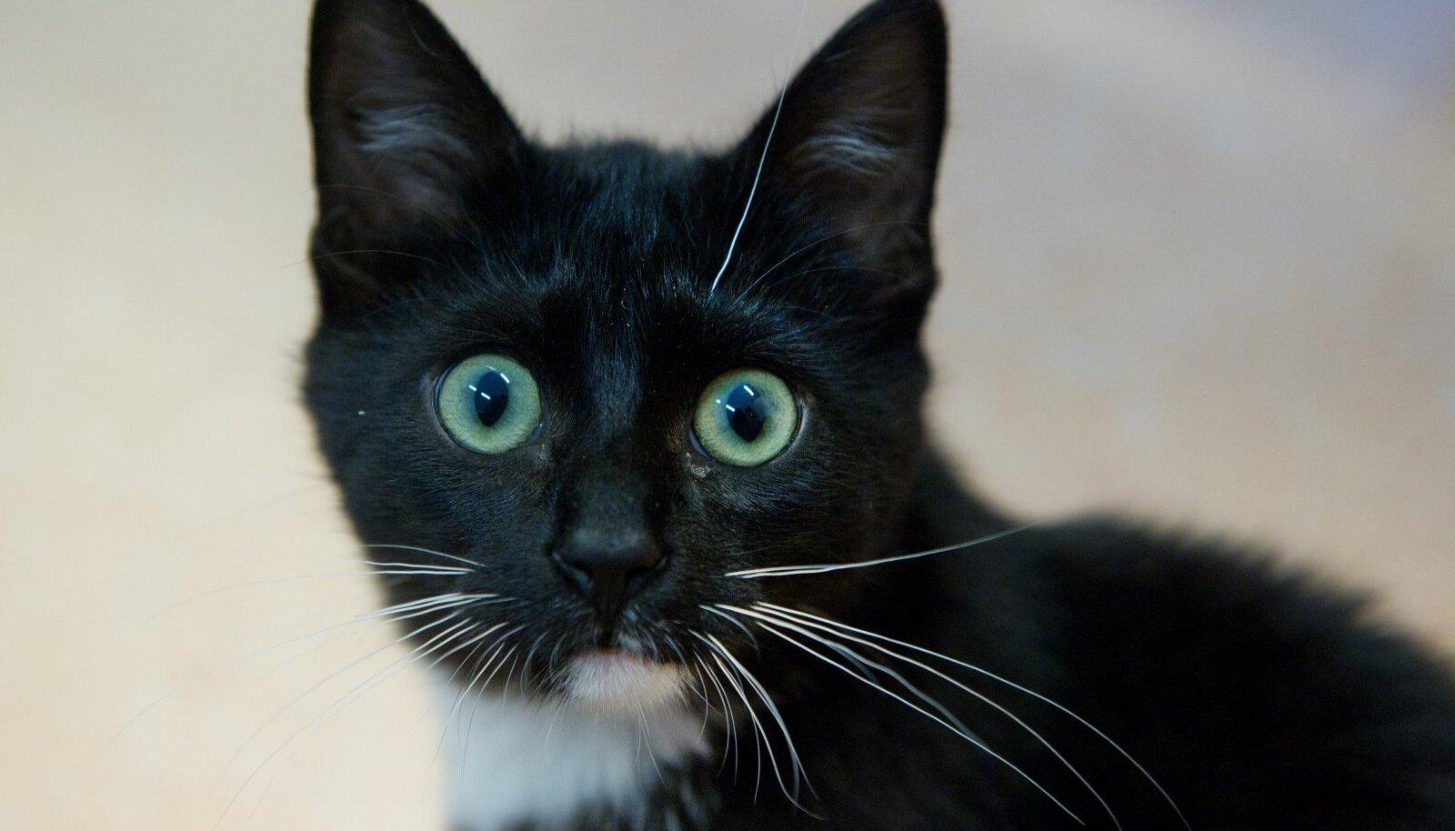 Brusli Liisu- päevakeskuse kass