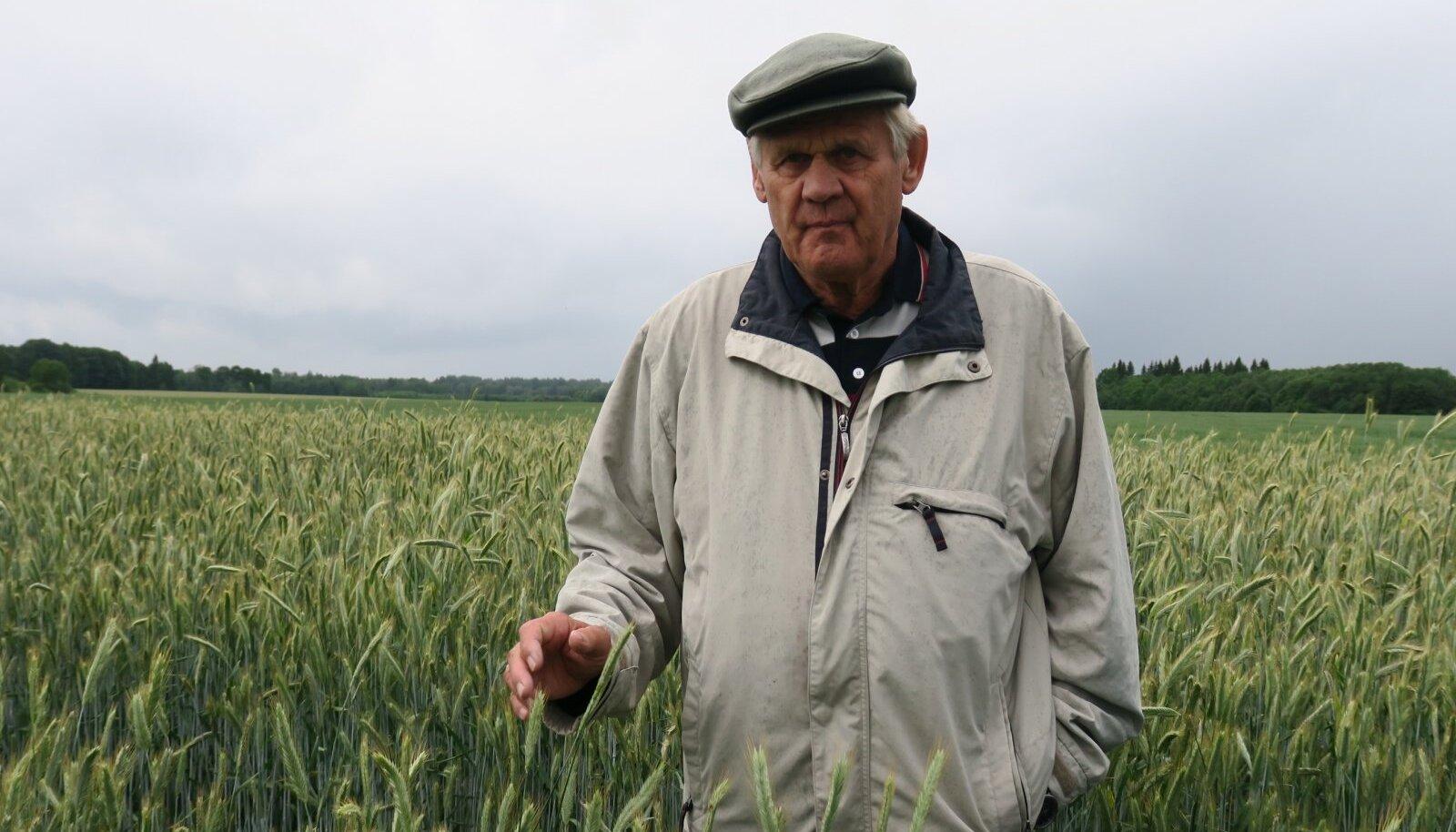 Tänavuse viljelusvõistluse kõrgeim saak kasvas Hendrik (pildil) ja Raido Allsaare rukkipõllul.