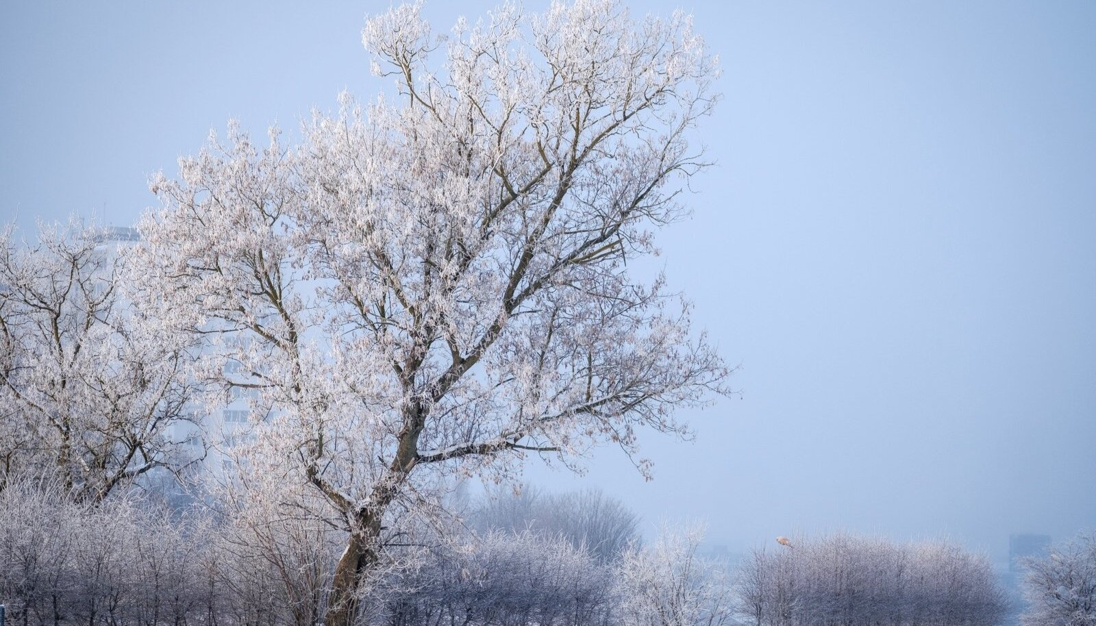 Talvine hommik Tallinnas 09.02.2018