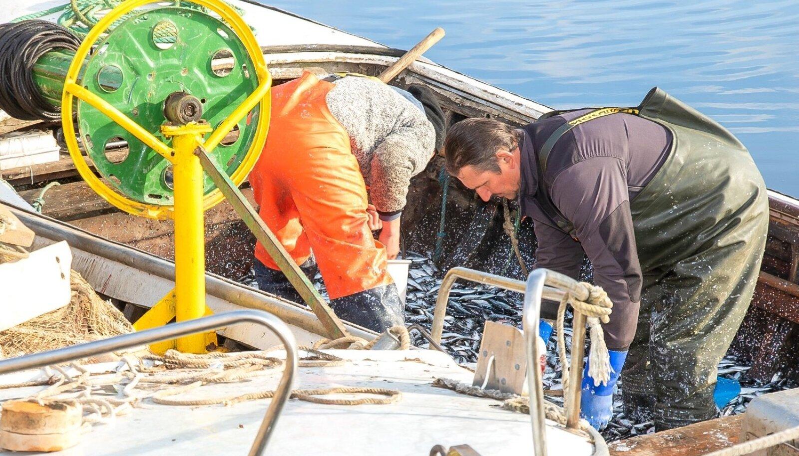 Kui kalur väidab, et hüljes ja kormoran söövad tema kala ära, siis see jutt eriti tõsiseltvõetav ei ole. Kaluril pole ju mingit alust vees ujuvat kala enne väljapüüki enda omaks pidada.
