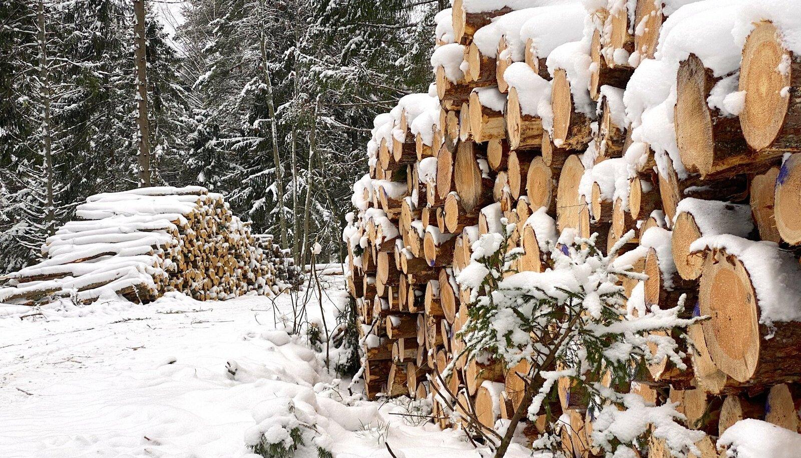 Milliseks kujuneb käesolev aasta metsasektoris?