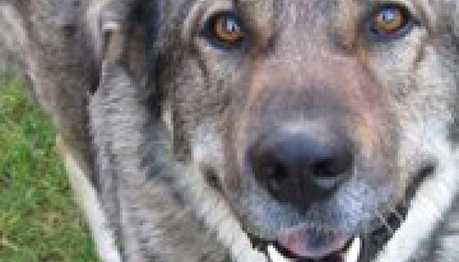 Pildil olev koer pole looga seotud