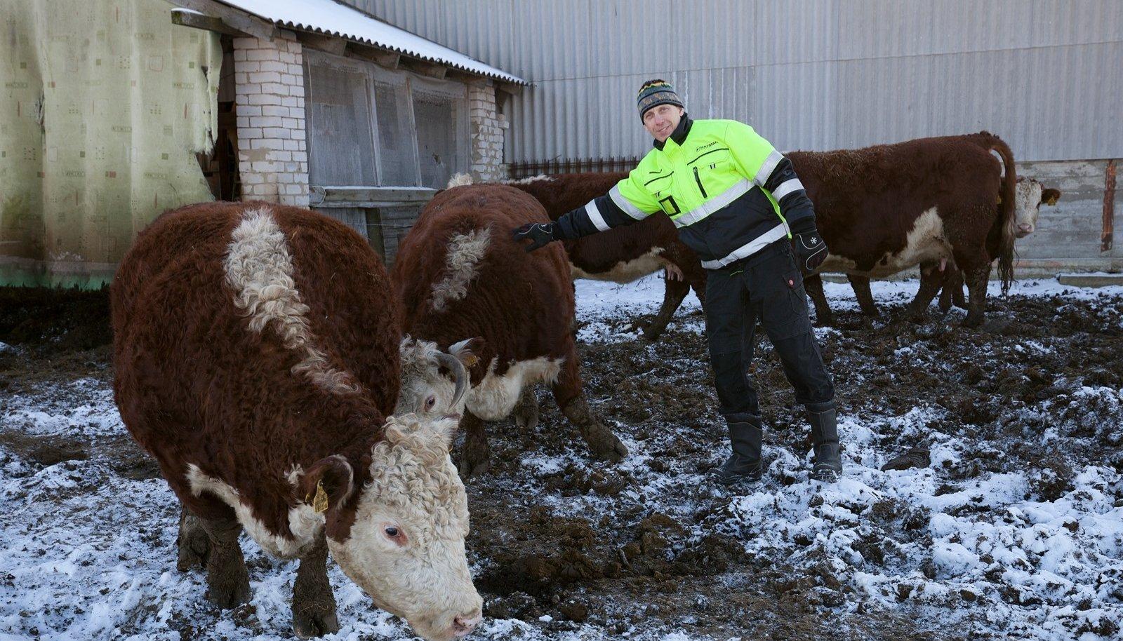 Mägipõllu mahetalu peremees Sander Sarap näeb mahetootmisel nii looma- kui teraviljakasvatuses avarat tulevikku, ent ei pea uue katusorganisatsiooni loomist sektorile kuigi vajalikuks.