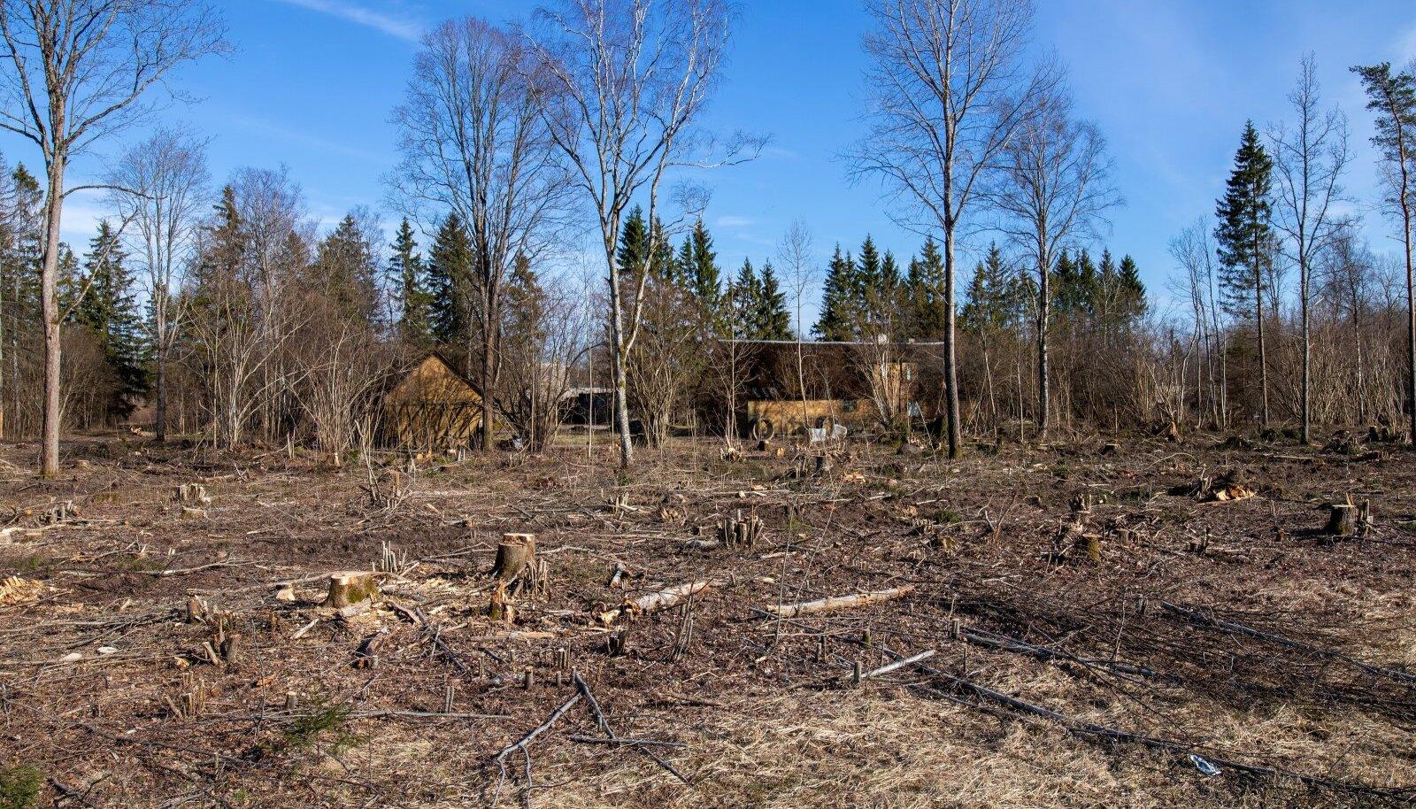 Kui metsaseaduse muudatus jõustub, ei või lageraielank olla suurem kui viis hektarit.