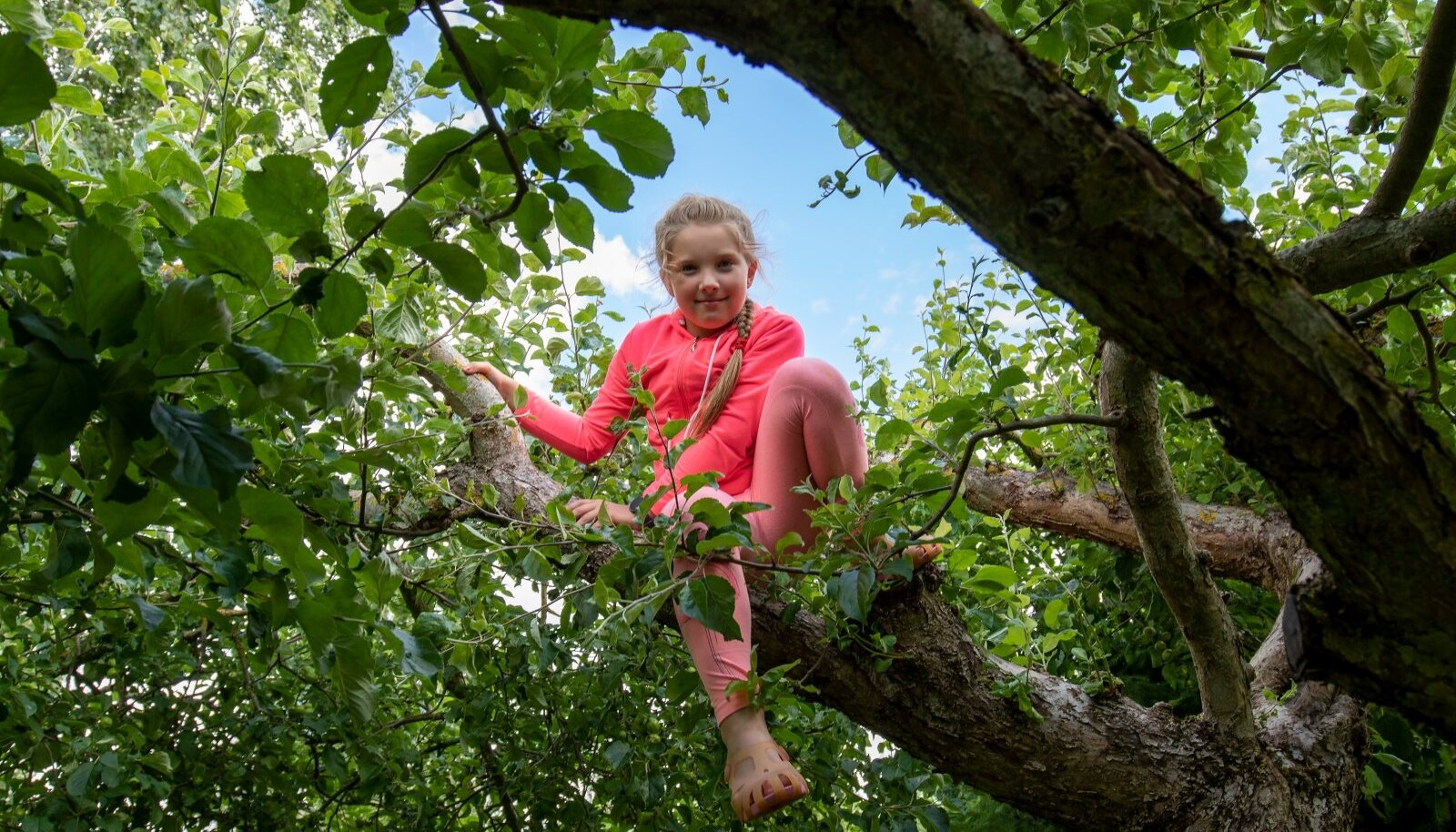 """Õunapuul on nii palju rohelisi lehti, et puu otsa roninud tüdrukut pole nende keskel nähagi. Ema lähenedes hüüab Elisabeth: """"Ma olen siin!"""""""