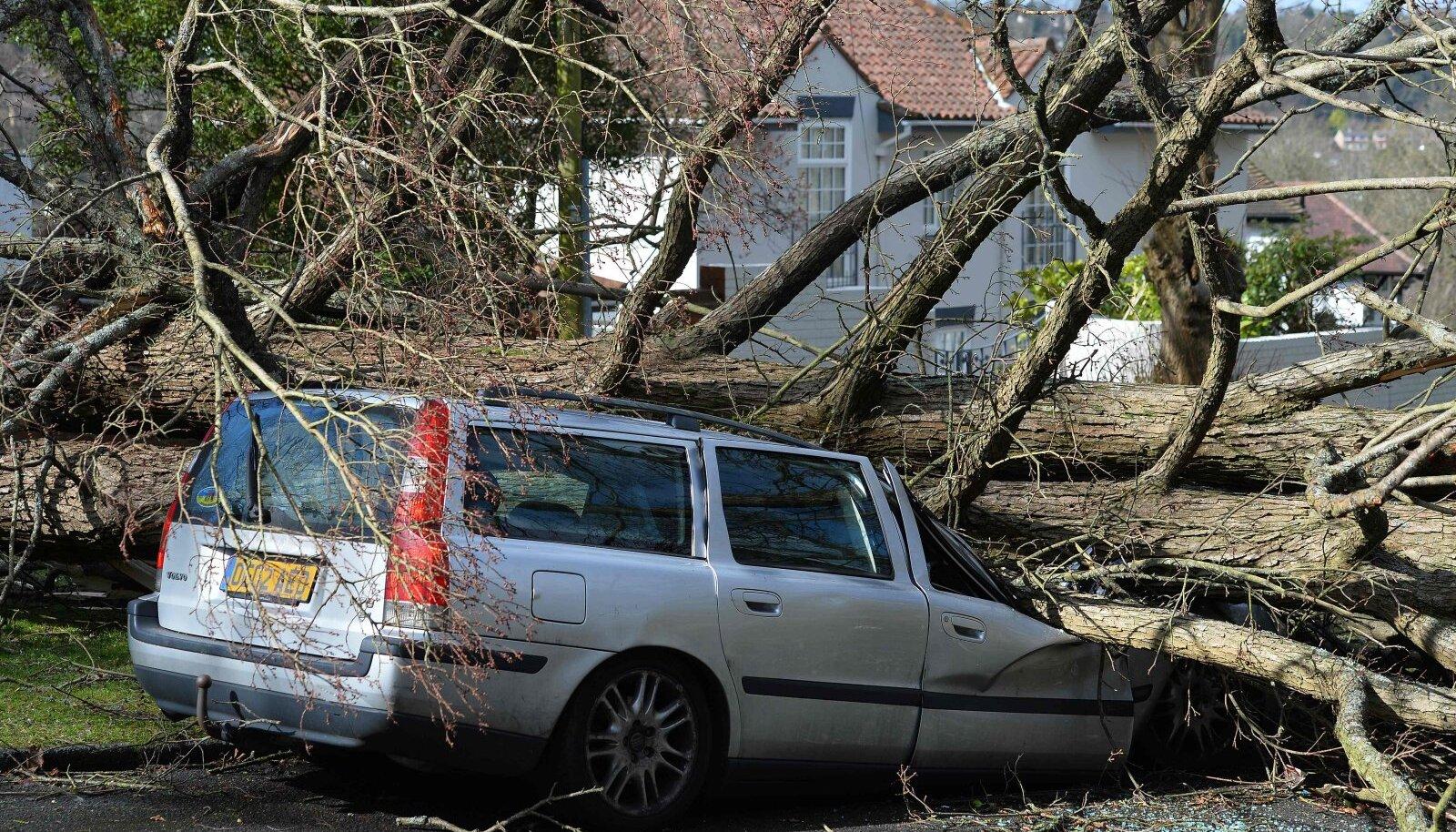 Auto ja puu kohtumine.