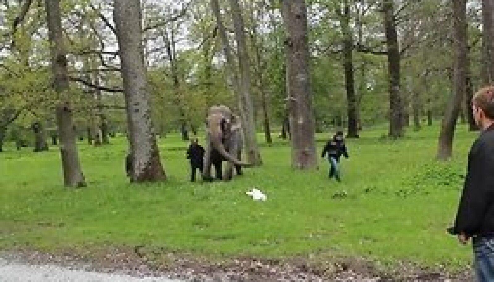 Слона возвращают в трейлер