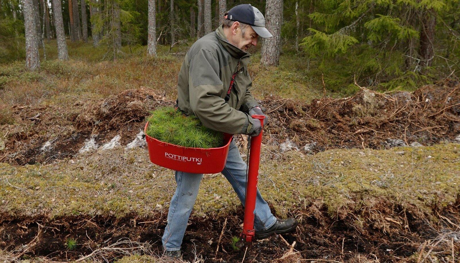 Eesti on üks metsarikkamaid maid – mets katab 52% meie maismaast.