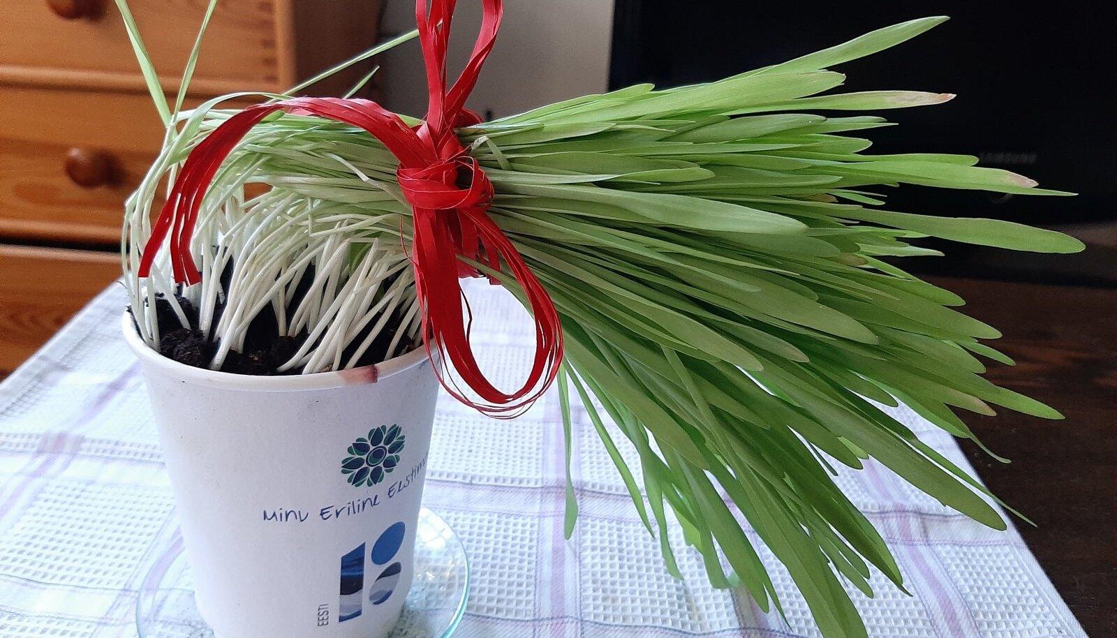 Rohelised rohujuuksed võib ka soengusse sättida