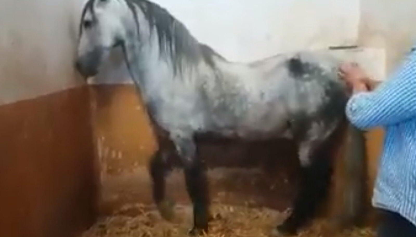 Flamenkohobune