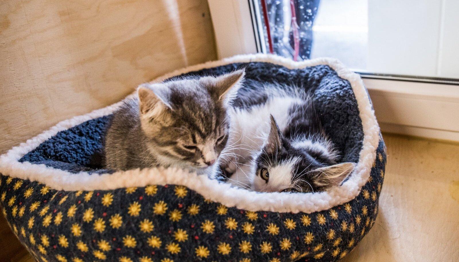 Mugav ase on kassidele elulise tähtsusega