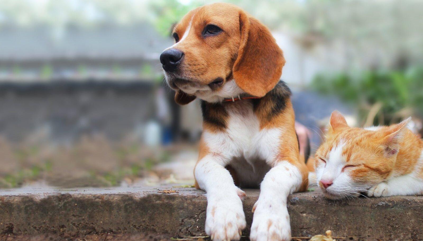 Lemmikloom valige vastavalt oma elustiilile.