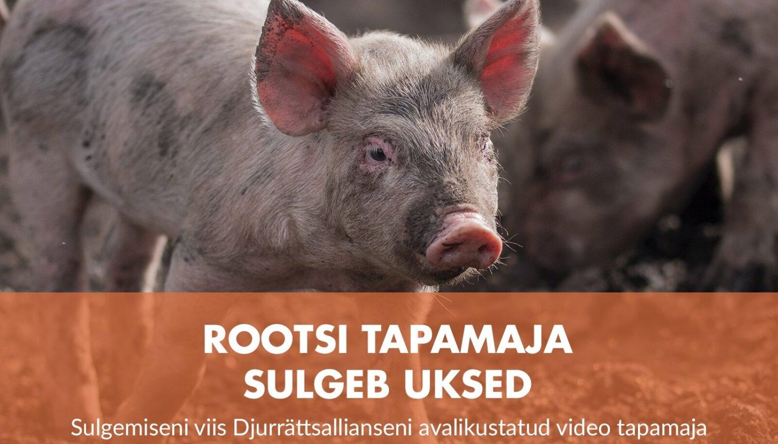 Rootsi tapamaja peab loomade väärkohtlemise tõttu uksed sulgema