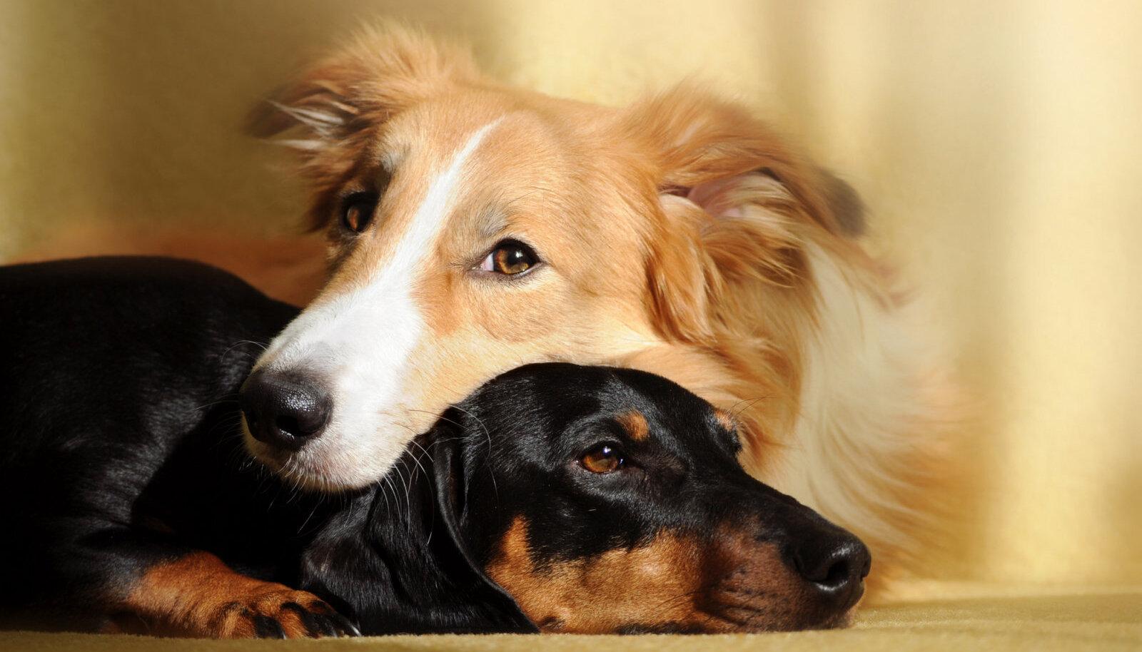 Loomadel on samamoodi tunded nagu inimestel