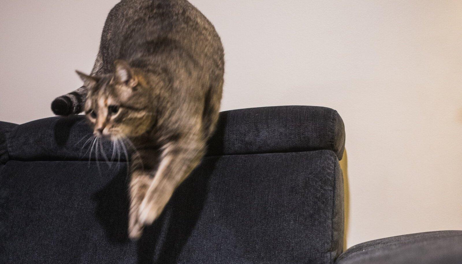 Kass diivanil