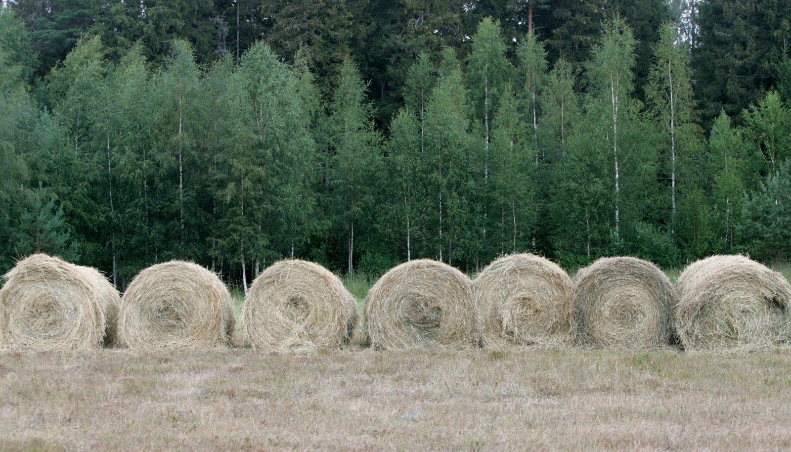 Põllud, metsad ja niidud seovad CO2, aidates nii kliimamuutuste vastu võidelda.