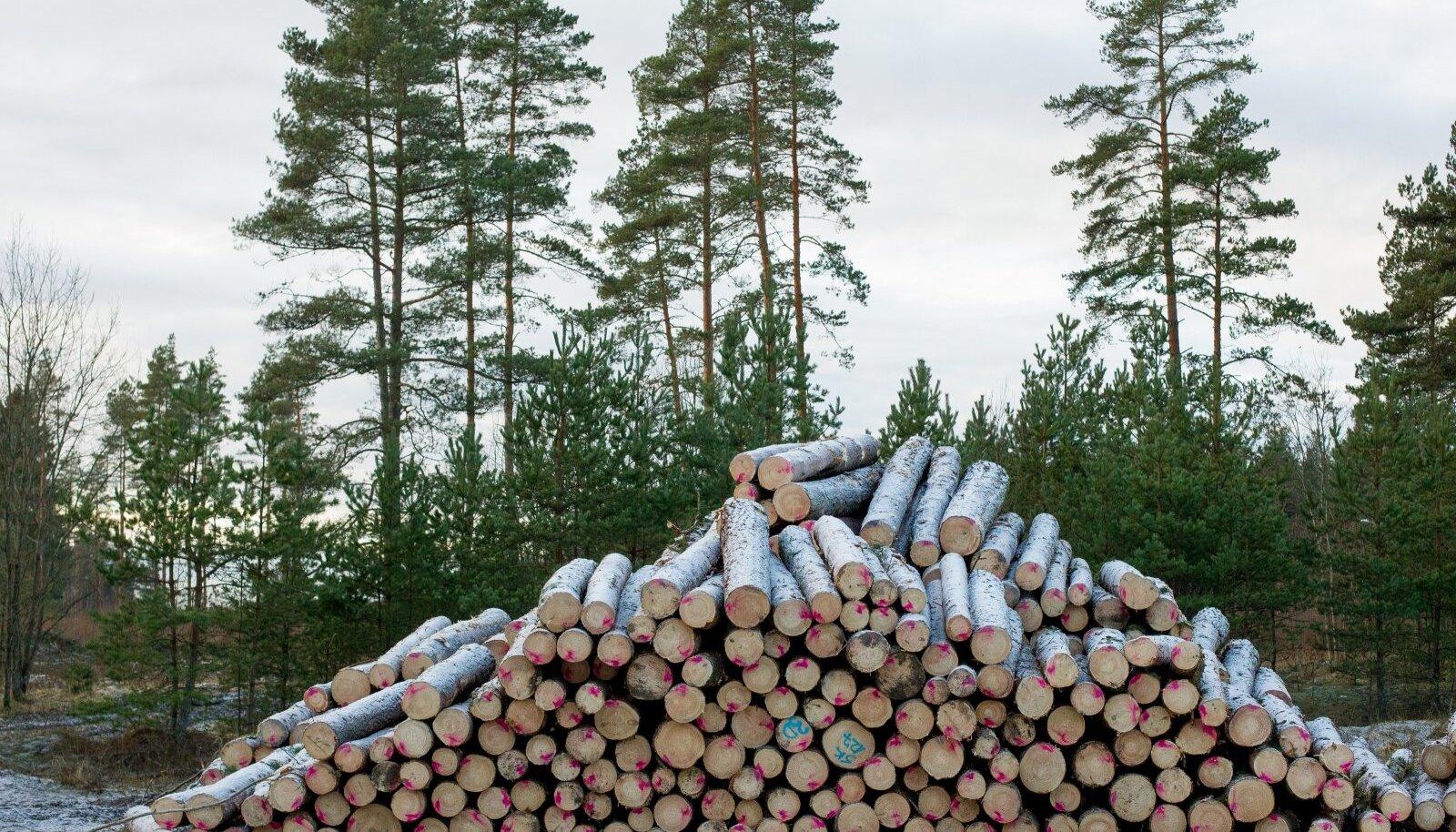 SMI andmed näitavad, et Eestis on metsa üle poole riigi pindalast ning kaitsealuste metsade osakaal on kasvanud 25,6%ni.