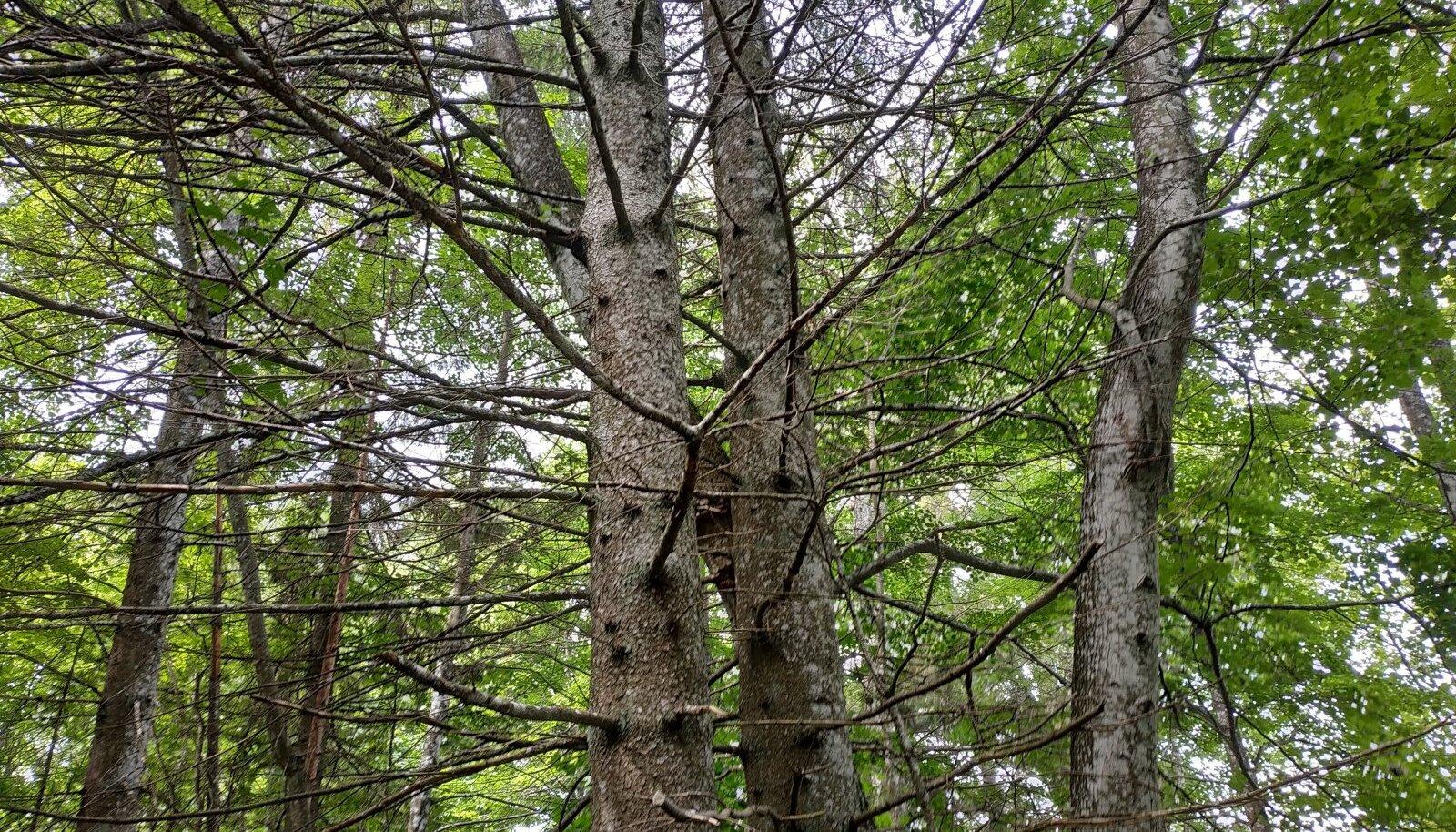 Puitmassi ja tselluloosi tootmine on Eesti puidutööstuses puuduv lüli, millesse peame panustama.