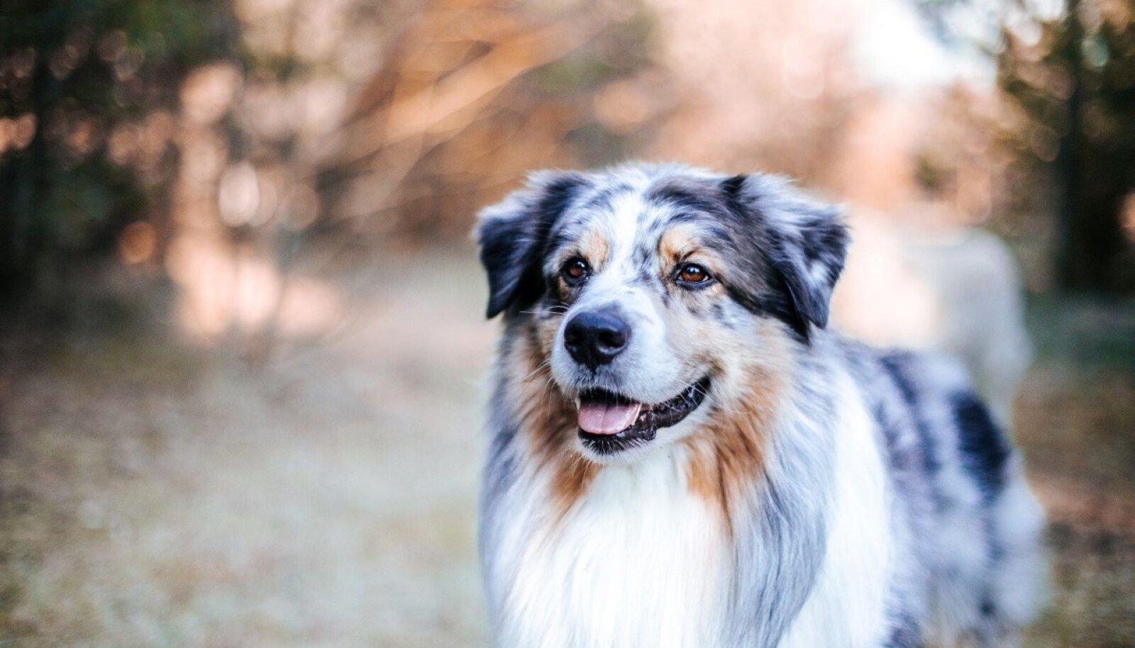 Koera ninamuster on sama unikaalne kui inimese sõrmejäg