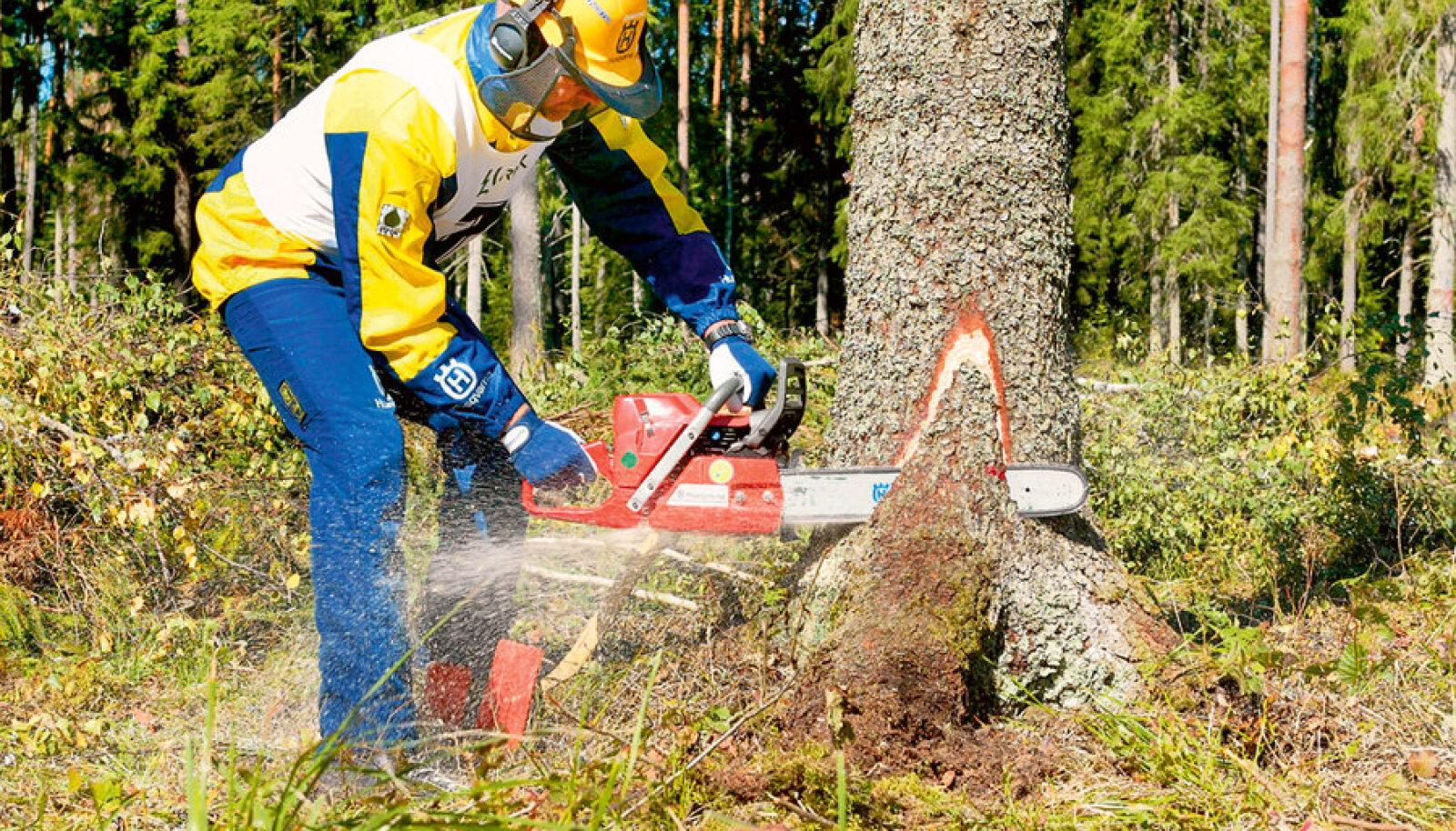 Kui kett terav, kasutusel kvaliteetsed määrdeained ning hooldustöö õigeaegselt tehtud, peab mootorsaag ka rängal metsatööl vastu aastaid.