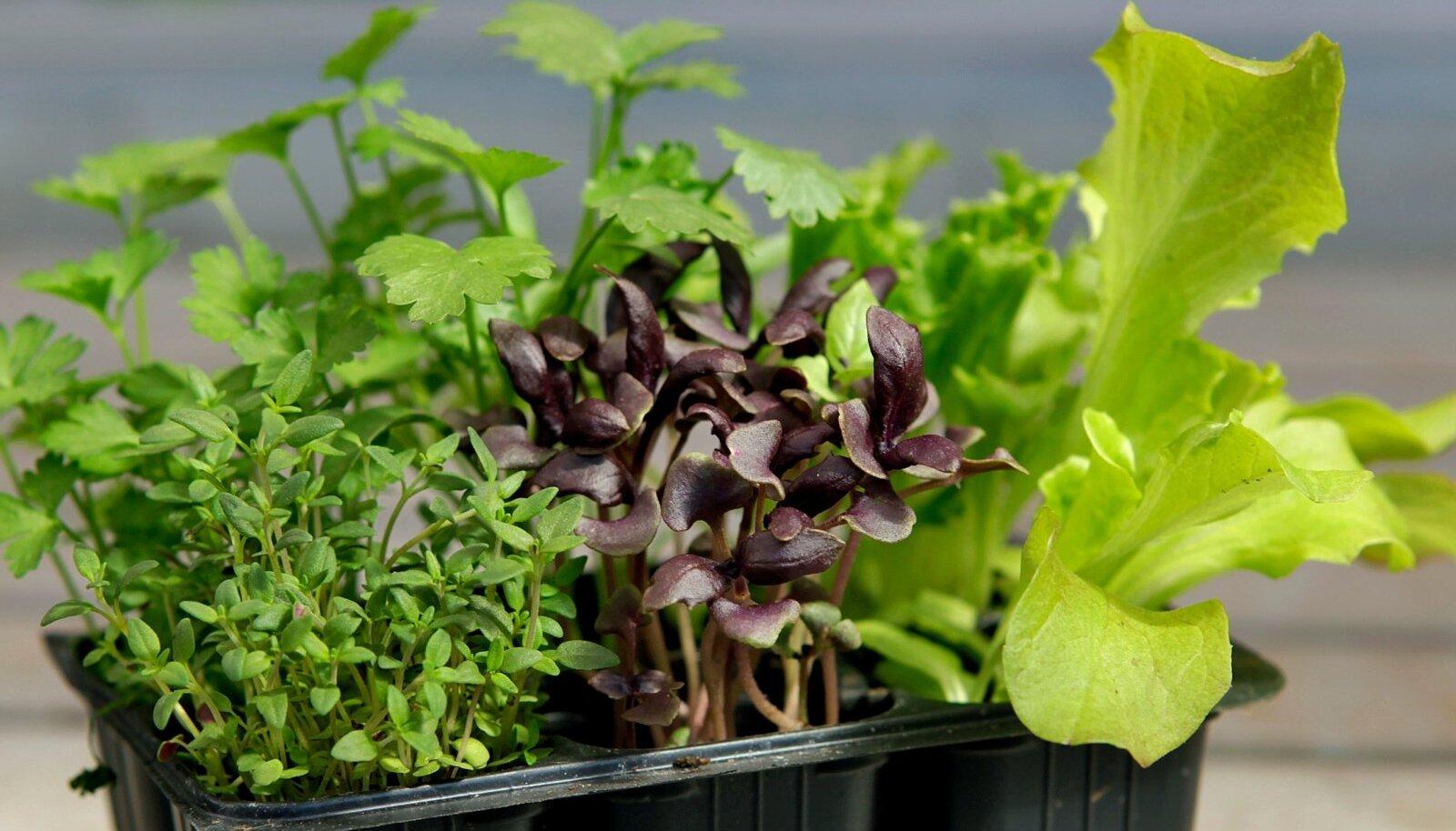 Kaunistades kas või kõige lihtsamat toitu ürtidega, muutub see hetkega gurmeeroaks!