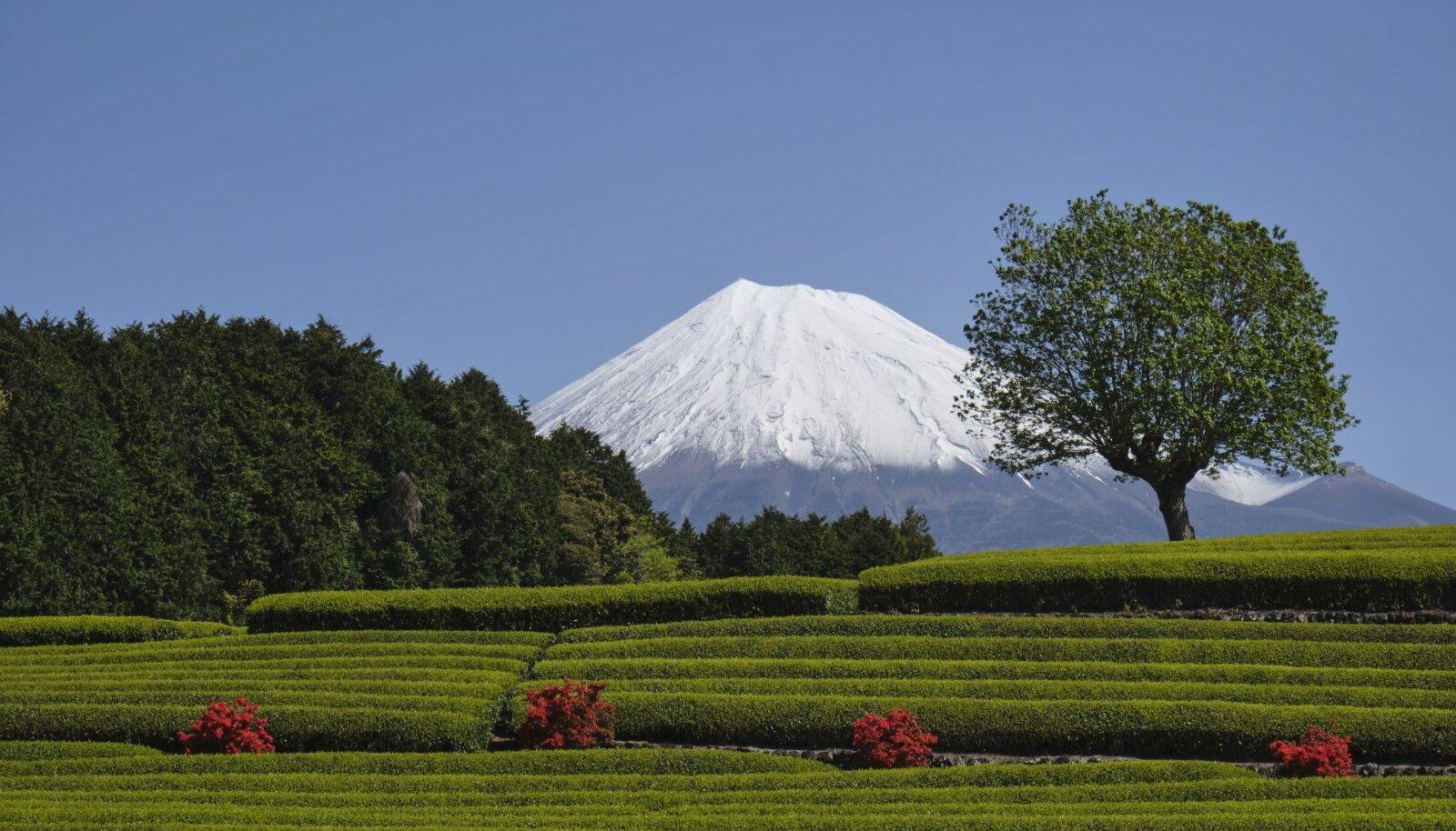 Fuji mäe vaade rohelise teeväljaga