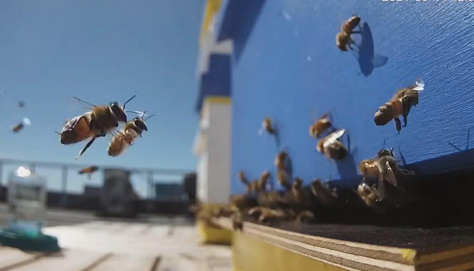Mesilased politseimaja katusel