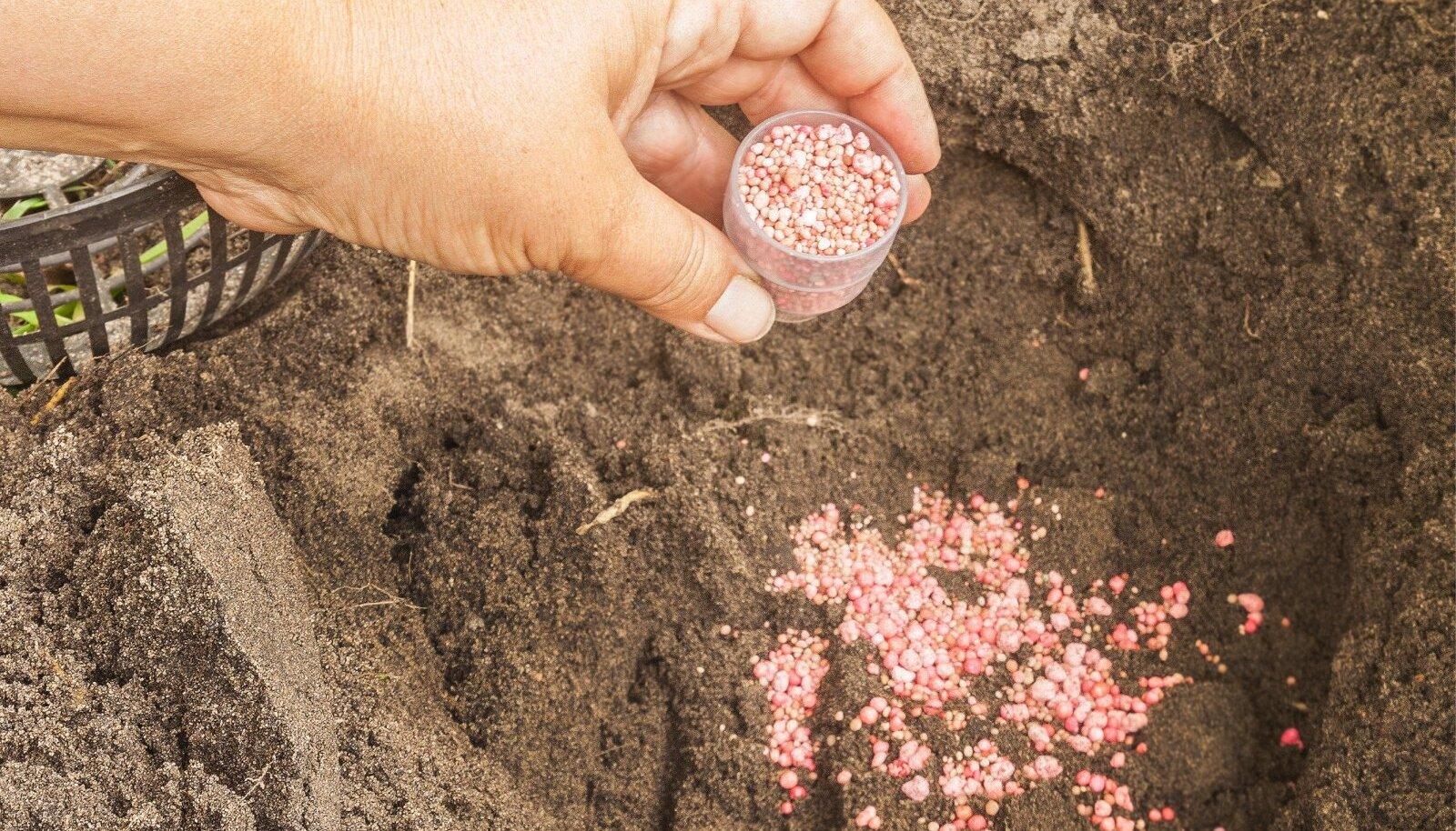 Sügisväetist võib kasutada ka sibullillede istutamisel, oluline on aga, et väetis ei puutuks lillesibulaga otseselt kokku – nende vahele peab jääma õhuke mullakiht.