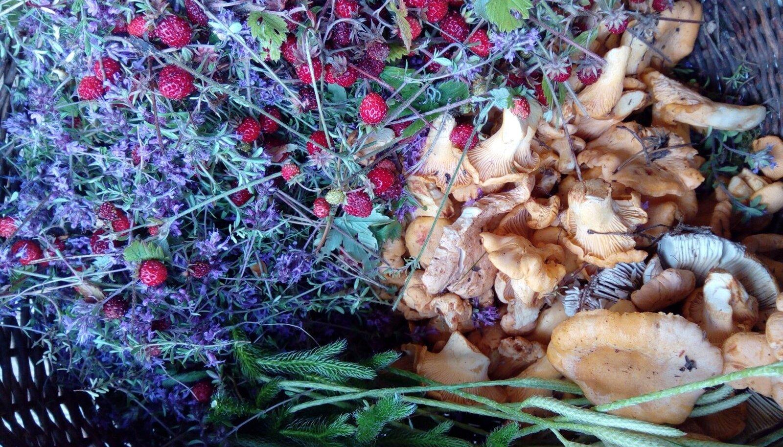 Kuigi tänavu sai kukeseeni Lõuna-Eestis korjata juba juuli alguses, pärast jaanipäeva saabunud vihmasid, on see rõõm üürikeseks jäänud. Kui aga sajud saabuvad, ei peaks seened tulemata jääma.
