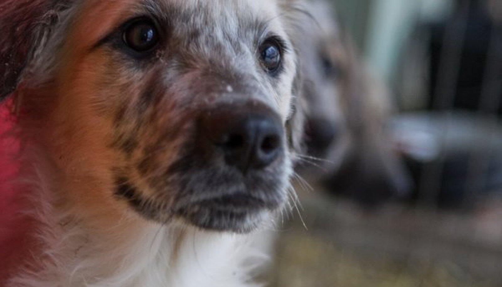 Valga koerte varjupaik