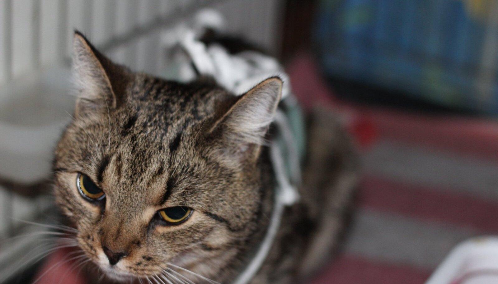 Kass Täpp.