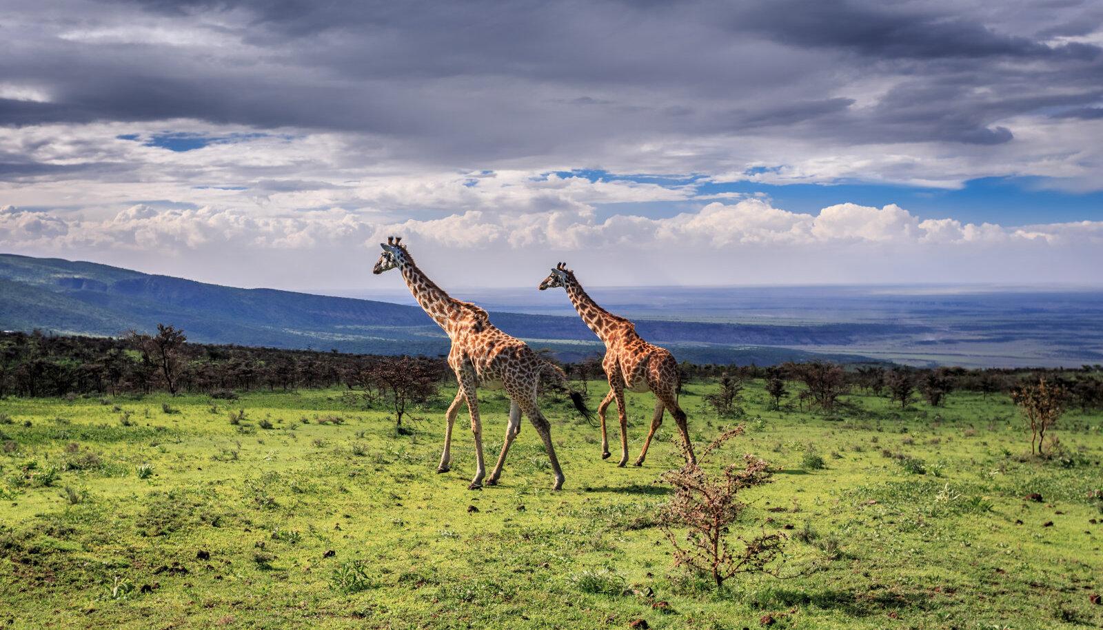 Serengeti rahvuspark Tansaanias